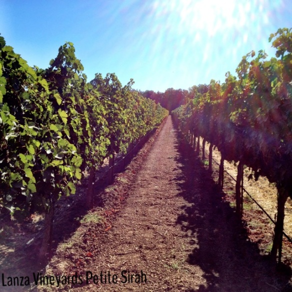 Weekly Photo Challenge: Petite Sirah